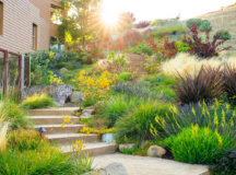 http://highlifemagazine.net - Waterwise Plants and Gardening