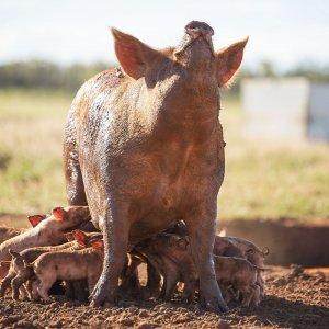 Discover-Farming-Goondiwindi-Highlife-Magazine