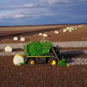 Australia_Cotton_10