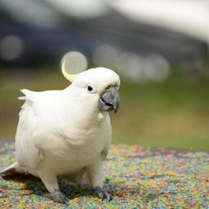 bird-show-Highlige